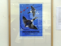 'House Martin' Limited Edition Screenprint
