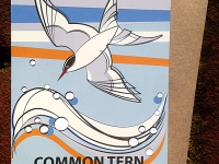 Common Tern Greetings Card