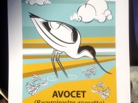 Ltd Edition Avocet Giclée