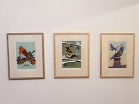 Large Robin, Redwing & jackdaw Prints