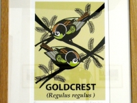 Small Framed Goldcrest Giclée