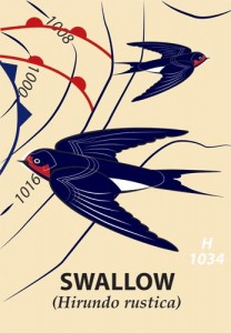 image of swalllows