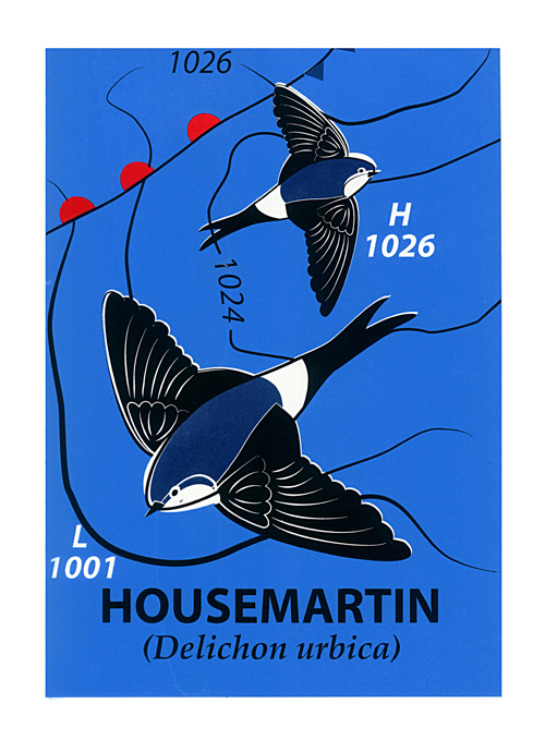 House Martin (Ltd Screen-print) by Mark Greco