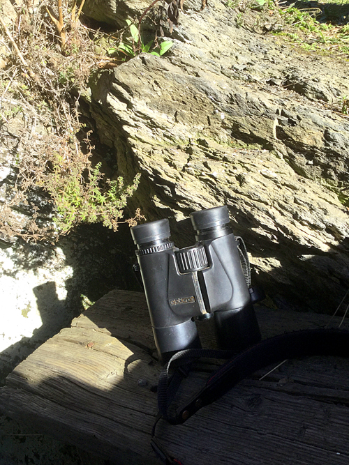 Binoculars ready in The Hide