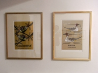 Large Goldcrest & Pintail Prints
