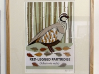 Large Red-legged Partridge Print