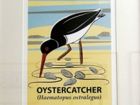 Small Framed Oystercatcher Giclée