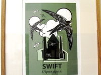 Framed Swift Screenprint